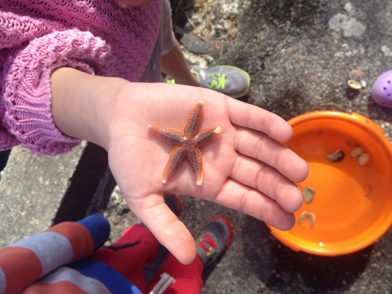 Ungene har storkoste seg, funnet sjøsterner og krabber, godt bevart i en stor balje til neste gang